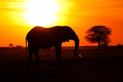 NXAI PAN SUNSET ELEPHANT 2