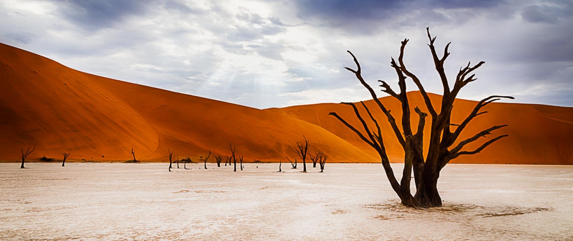 12 day photographers Safari – Namibia